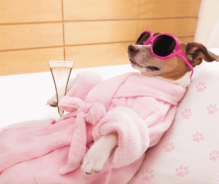 Hund im rosa Bademantel mit rosa Sonnenbrille und einem Glas Sekt in der Pfote. Er liegt auf dem Rücken lim Hundekörbchen mit einem rosaroten Kissen